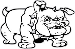 Classic bulldog illustration Royalty Free Stock Images