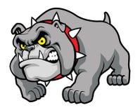Classic bulldog pose Stock Images