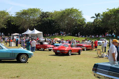 Classic cars driving on lawn Royalty Free Stock Images