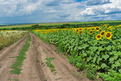 Classic central Ukrainian rural landscape Stock Photography