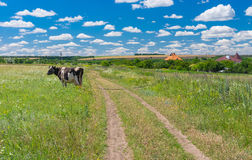 Classic central Ukrainian rural landscape Stock Photos