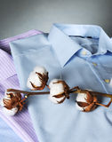 Classic cotton shirts. With cotton plant Royalty Free Stock Images