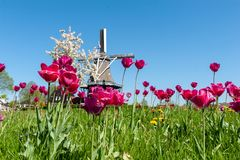 Classic Dutch Windmill stock images