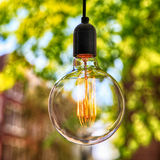 Classic Edison light bulb on green leaves background Royalty Free Stock Images