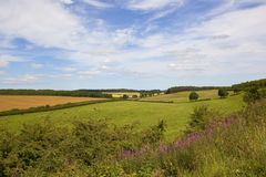 Classic English farming landscape with wildflowers Royalty Free Stock Photography