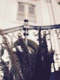 Classic Ferns in Front of a House in Savannah - Georgia - USA. Savannah, a coastal Georgia city, is separated from South Carolina by the Savannah River. It royalty free stock image