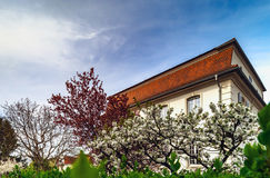 Classic french house in residential district of Strasbourg, blos. Som spring time, flowering and gardening. France Stock Photo