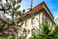 Classic french house in residential district of Strasbourg, blos. Som spring time, flowering and gardening. France Royalty Free Stock Images