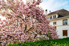 Classic french house in residential district of Strasbourg, blos. Som spring time, flowering and gardening. France Royalty Free Stock Image