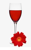 Classic Glass of Red Wine and Red Gerbera Flower isolated on whi Stock Photo
