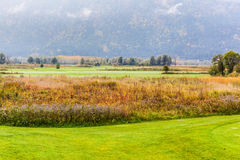 Classic golf course. A idyllic meadow or golf course in a sunny beautiful morning Stock Photography