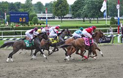 And They`re Off by Fleetphoto. Classic horse racing photos from award winning photographer Fleetphoto. Opening day at Saratoga for the first race of the new meet stock images