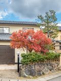 Classic Japanese style house. Exterior design of classic Japanese style house building with autumn leaves tree at front garden stock photography