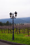Classic Landscape lamppost in Renaissance style on hill among ro Royalty Free Stock Images