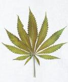 Classic marijuana leaf Stock Image