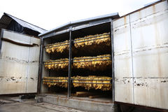 The classic method of drying tobacco in the kiln Stock Images