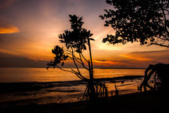 Classic mood tone color silhouette image of mangrove tree on the beach with stunning sunset. Background stock photos
