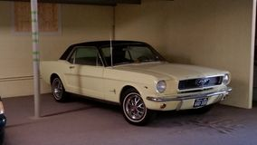 Classic mustang. Vintage Mustang creme at antique dealer showroom Stock Images