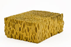 Classic natural sponge Stock Photos