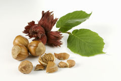 Classic nuts Royalty Free Stock Image