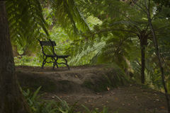 Classic old antique bench in botanical garden royalty free stock photography