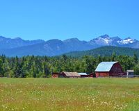 CLASSIC OLD RED BARN IN A MONTANA MEADOW. This classic old barn was in a beautiful meadow of white wildflowers, and snow capped mountains towered in the Stock Photos