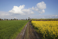Classic Punjabi landscape Stock Images