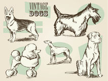 Classic Retro Ornate Dog Collection Stock Photography