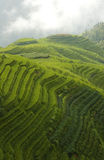 Classic rice terraces Royalty Free Stock Image