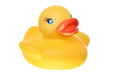 Classic rubber ducky on white ground Royalty Free Stock Photos