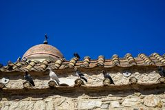 Classic scene of pigeons in white, black and grey color on terracotta roof tile of old classic little church in earth tone natural. Stone wall with clear blue royalty free stock photo