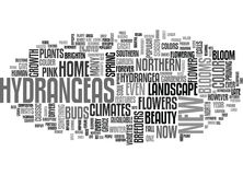 A Classic Southern Beauty Now Blooms In The North Word Cloud. A CLASSIC SOUTHERN BEAUTY NOW BLOOMS IN THE NORTH TEXT WORD CLOUD CONCEPT Stock Photo