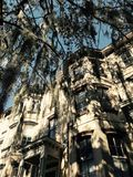 Classic Southern Trees against facades in Savannah, Georgia - USA. Savannah, a coastal Georgia city, is separated from South Carolina by the Savannah River. It Royalty Free Stock Photography
