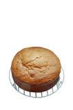 Classic Sponge Cake. Sweet cake isolated on white Stock Images