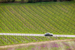 A classic sports car driving through a bvineyard for a short weekend vacation. During spring royalty free stock image