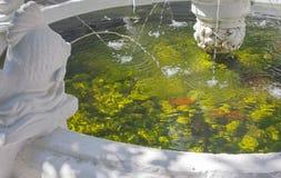 Classic stone fountain basin Royalty Free Stock Photography