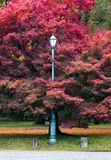 Classic street lamp in autumn park. Royalty Free Stock Photos