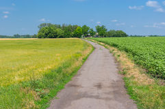 Classic summer landscape with country road Royalty Free Stock Photography