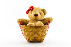 Classic teddy bear red bow in the basket. Stock Photos