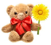 Classic teddy bear with red bow holding flower Stock Photo