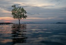 Classic Thailand sunset view with alone tree in the water. Classic Thailand sunset view withalone tree in the water, ocean, sun and sky Royalty Free Stock Photography