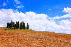 Classic Tuscan landscape. Famous cluster of cypress trees among the fields of Tuscany, Italy Royalty Free Stock Images