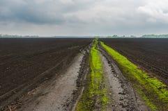 Classic Ukrainian agricultural landscape Stock Photo