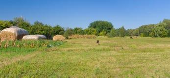 Classic Ukrainian rural landscape Royalty Free Stock Image