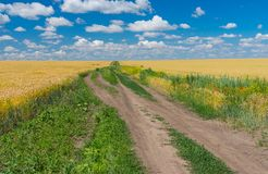 Classic Ukrainian rural landscape with wheat field Stock Images