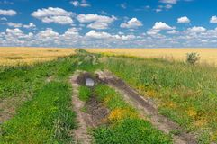 Classic Ukrainian rural landscape Royalty Free Stock Image