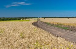 Classic Ukrainian summer landscape with corn fields Stock Photos