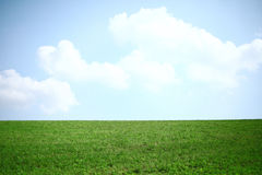 Classic view on a piece of grassland with a blue sky and clouds Stock Images