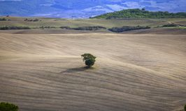 Tuscany - Landscape panorama, hills and meadow, Toscana - Italy. Classic view of scenic Tuscany landscape with idyllic rolling hills and valleys, Val d`Orcia Stock Images