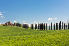 Classic view of Tuscan farmhouse, green field and cypress tree r Stock Images